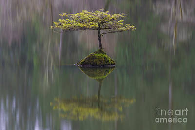 Fairy Lake Fir Art Print