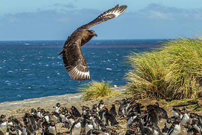 Falkland Islands Photograph - Falkland Islands, Bleaker Island by Jaynes Gallery