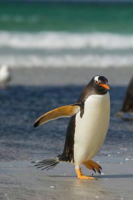 Falkland Islands Art Print
