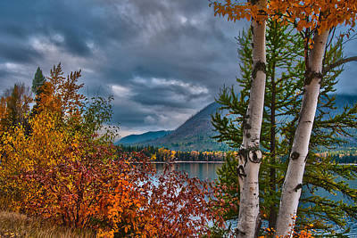 Photograph - Fall Aspens On Lake Mcdonald by Brenda Jacobs