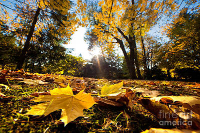 Path Photograph - Fall Autumn Park. Falling Leaves by Michal Bednarek