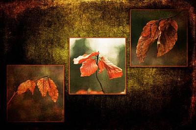 Photograph - Fall Collection by Randi Grace Nilsberg