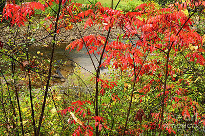 Virginia River Photograph - Fall Color Elk River by Thomas R Fletcher