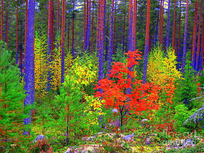 Photograph - Fall Colors by Pauli Hyvonen