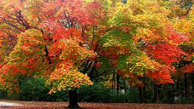 Featured Tapestry Designs - Fall Explosion of Color by Kenny Glover