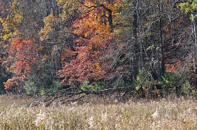 Fall Field Original
