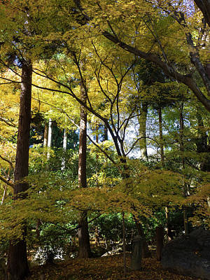 Photograph - Fall Foliage At Ryoan-ji Temple, Kyoti by Panoramic Images