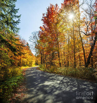 Christmas Christopher And Amanda Elwell - Sun in fall forest with road by Elena Elisseeva