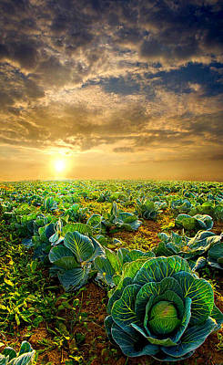 Cabbage Photograph - Fall Harvest by Phil Koch
