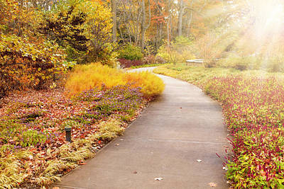 Photograph - Fall In The Park by Alexey Stiop