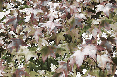 Photograph - Fall Leaves by Jim And Emily Bush