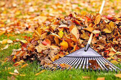 Landscapes Royalty-Free and Rights-Managed Images - Fall leaves with rake by Elena Elisseeva