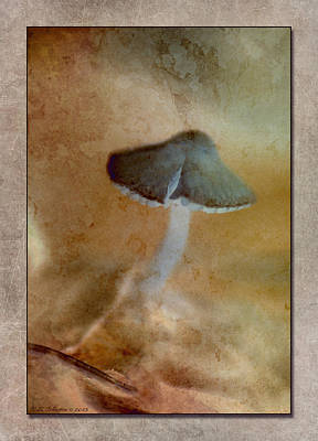 Photograph - Fall Mushroom 13 by WB Johnston