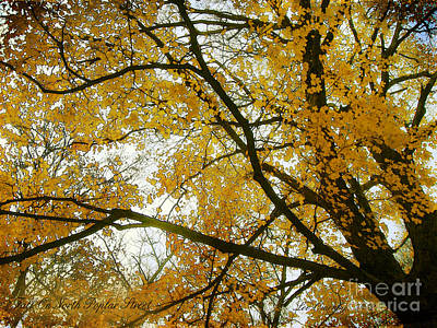 Photograph - Fall On North Poplar Street by Lee Owenby