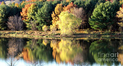 Photograph - Fall Reflections by Elizabeth Winter
