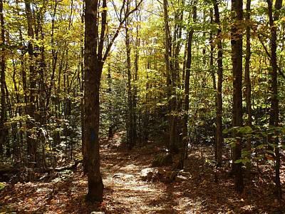 Photograph - Fall Trail by Gene Cyr