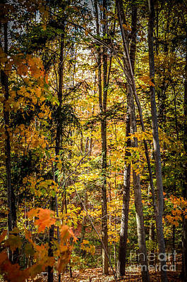 Photograph - Fall Trees by Ronald Grogan
