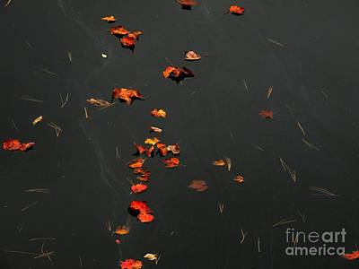 Photograph - Falling Leaves by Marcia Lee Jones