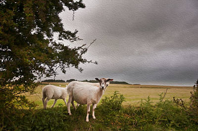 Farm Sheep In Landscape On Stormy Summer Day Art Print