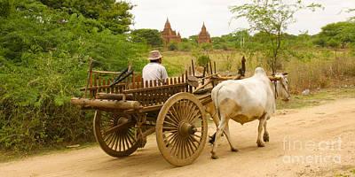 Farmer Driving An Ox Cart Old Bagan Burma Art Print