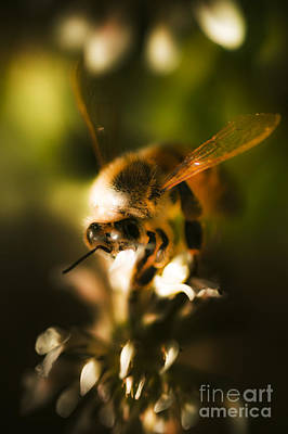 Bee Collects Nectar Photograph - Fauna And Flora Meet by Jorgo Photography - Wall Art Gallery