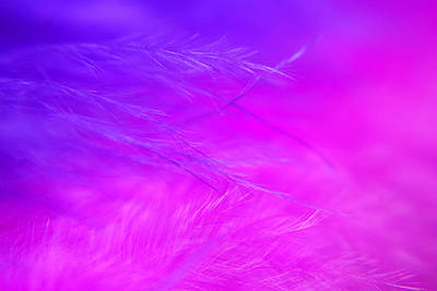 Photograph - Feathers by Larah McElroy