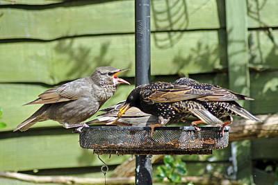 Photograph - Feeding Time by Tony Murtagh