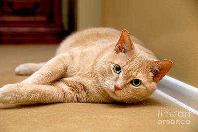 Resting Photograph - Feline Portrait by Amy Cicconi
