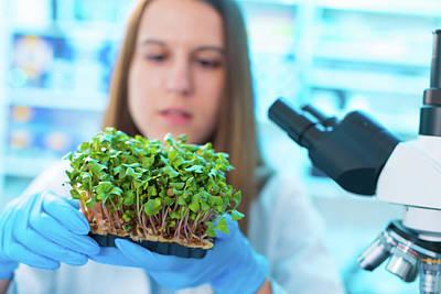 Female Biologist Holding Seedlings Art Print by Wladimir Bulgar/science Photo Library