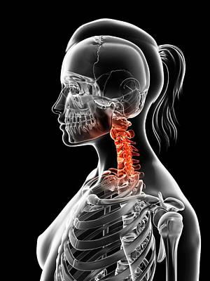 Human Head Photograph - Female Neck Bones by Sebastian Kaulitzki