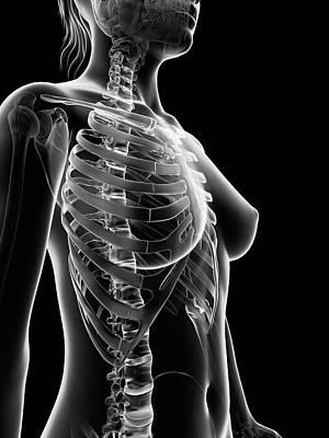 Backbone Photograph - Female Skeleton by Sebastian Kaulitzki