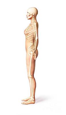 False Ribs Digital Art - Female Standing, With Skeletal Bones by Leonello Calvetti