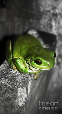 Fencepost Photograph - Fence Frog by Jorgo Photography - Wall Art Gallery