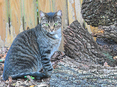 Photograph - Feral Cat Ms.kit By The Wood Pile by Strangefire Art       Scylla Liscombe