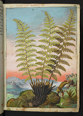 Physician Photograph - Fern by British Library