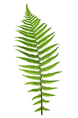 State Word Art - Fern leaf by Elena Elisseeva