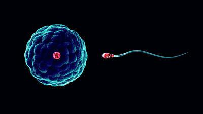 Heredity Photograph - Fertilisation by Christian Darkin