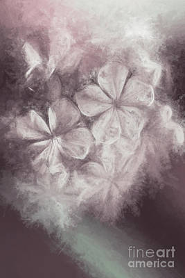 Florals Digital Art - Fibonacci flowers in energy manipulation calculus by Jorgo Photography - Wall Art Gallery