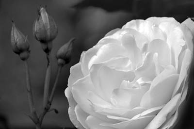 Photograph - First Bloom. by Terence Davis