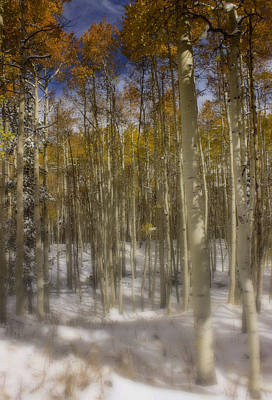 Photograph - First Snow  by Ellen Heaverlo