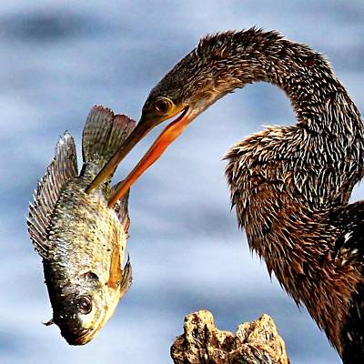 Photograph - Fish Dinner by Ira Runyan