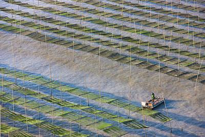 Fishing Boat Sailing Through Bamboo Print by Keren Su