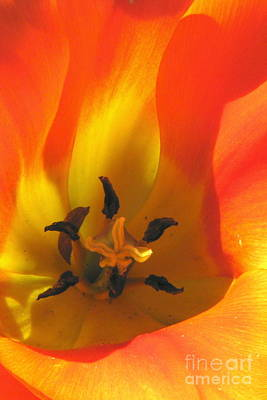 Photograph - Flaming Beauty by Frank Townsley