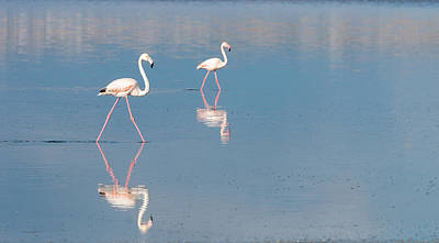 Flamingo Birds On A Lake Original by Michalakis Ppalis
