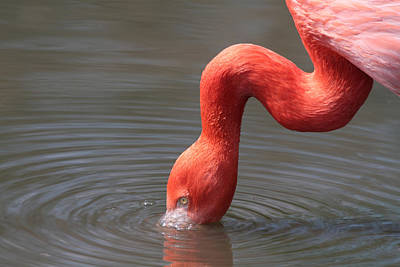 Abstract Airplane Art Rights Managed Images - Flamingo Royalty-Free Image by Chris Smith