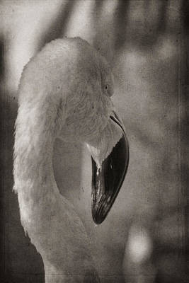 Photograph - Flamingo On A Fall Day by Theo O'Connor