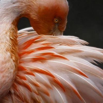 Photograph - Flamingo by Steve McKinzie