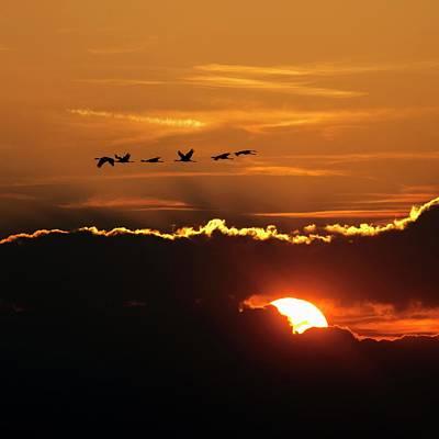 Waterbird Photograph - Flamingos At Sunset by Babak Tafreshi