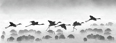 Digital Enhancement Photograph - Flamingos Landing, Kenya by Panoramic Images