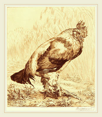 1833 Drawing - Félix Bracquemond French, 1833-1914, The Old Cock by Litz Collection